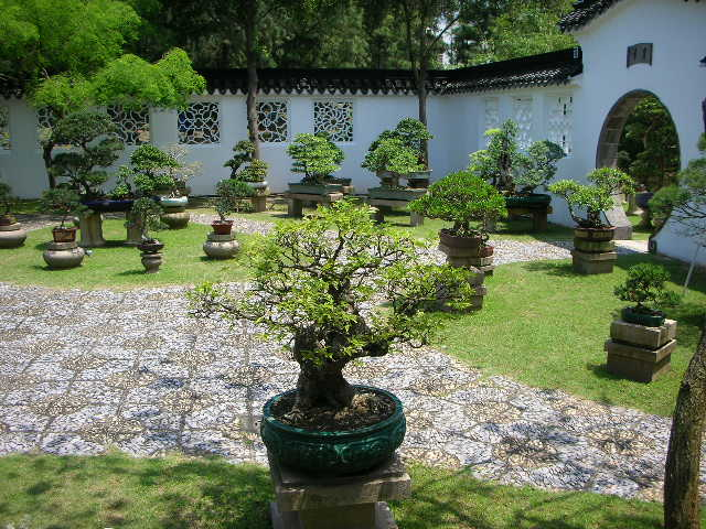 Bonsai images curated by mody - Video bonsai jardin japonais ...